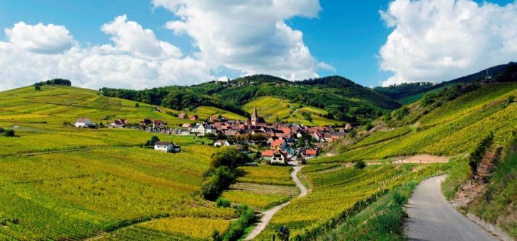 Вина Франції: Ельзас