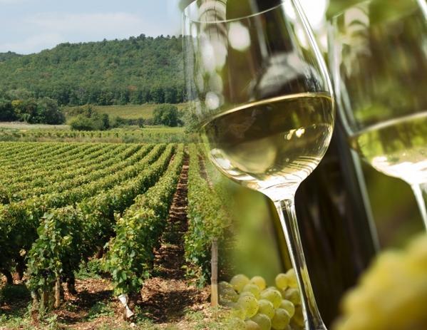 Вина Франции: Эльзас