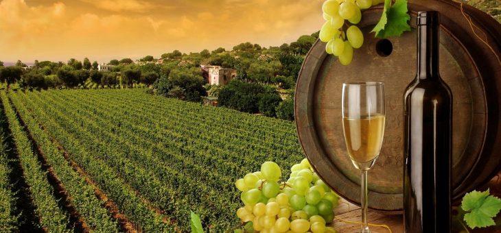 Виноробні традиції Франції