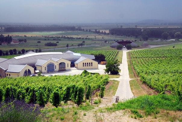 Божоле-нуво - сорт молодого французского вина